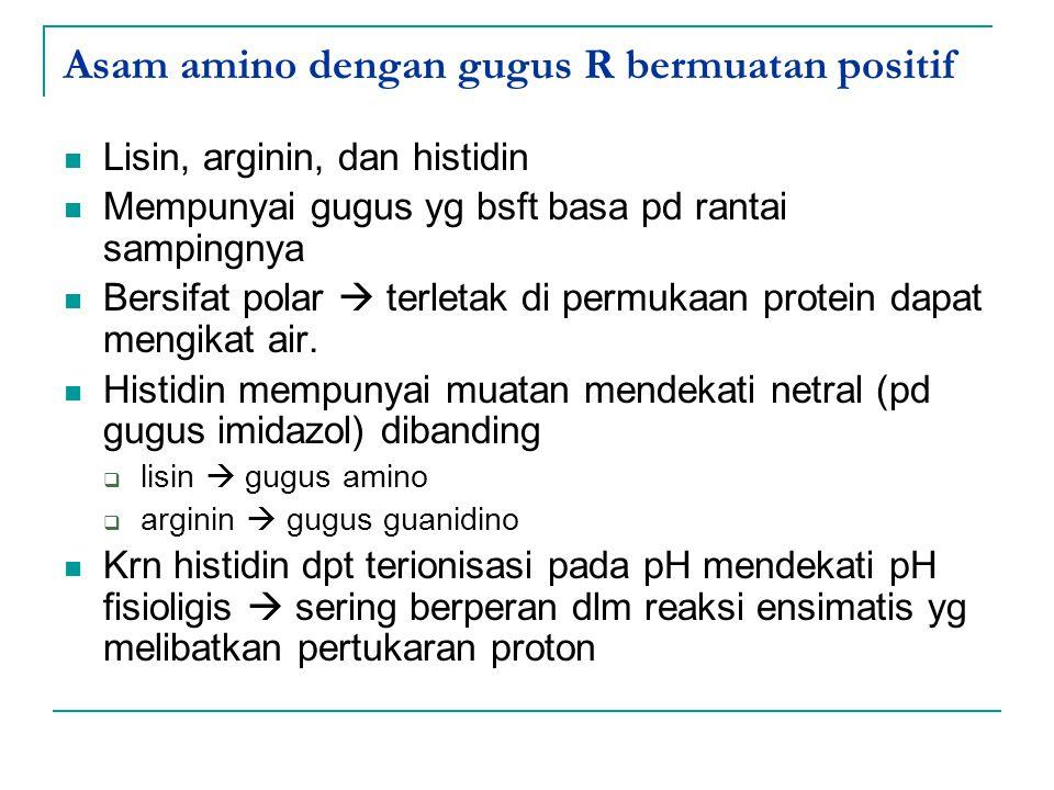 Asam amino dengan gugus R bermuatan positif Lisin, arginin, dan histidin Mempunyai gugus yg bsft basa pd rantai sampingnya Bersifat polar  terletak d