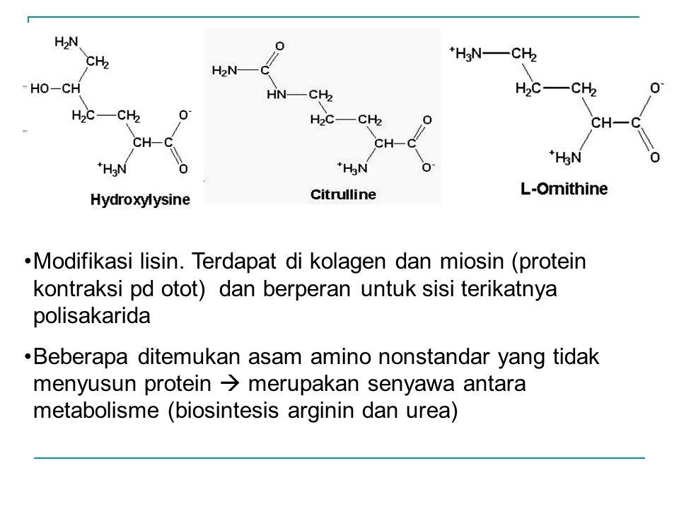 Modifikasi lisin. Terdapat di kolagen dan miosin (protein kontraksi pd otot) dan berperan untuk sisi terikatnya polisakarida Beberapa ditemukan asam a