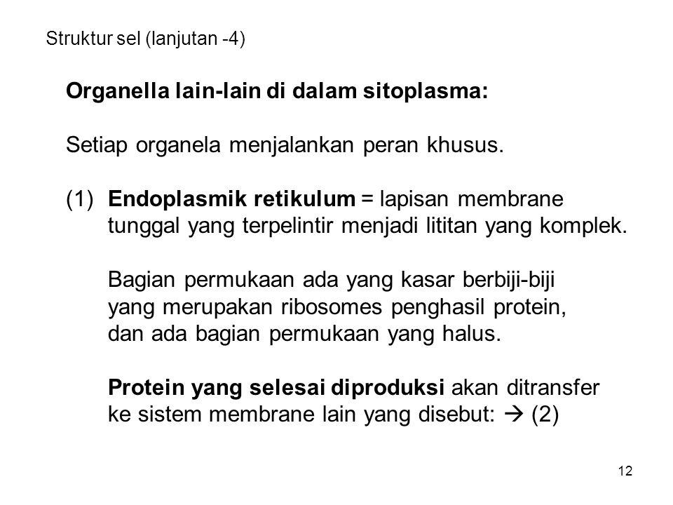 12 Struktur sel (lanjutan -4) Organella lain-lain di dalam sitoplasma: Setiap organela menjalankan peran khusus. (1)Endoplasmik retikulum = lapisan me