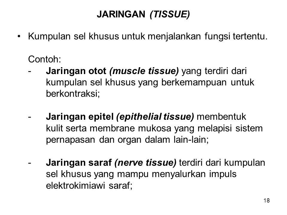 18 JARINGAN (TISSUE) Kumpulan sel khusus untuk menjalankan fungsi tertentu. Contoh: -Jaringan otot (muscle tissue) yang terdiri dari kumpulan sel khus