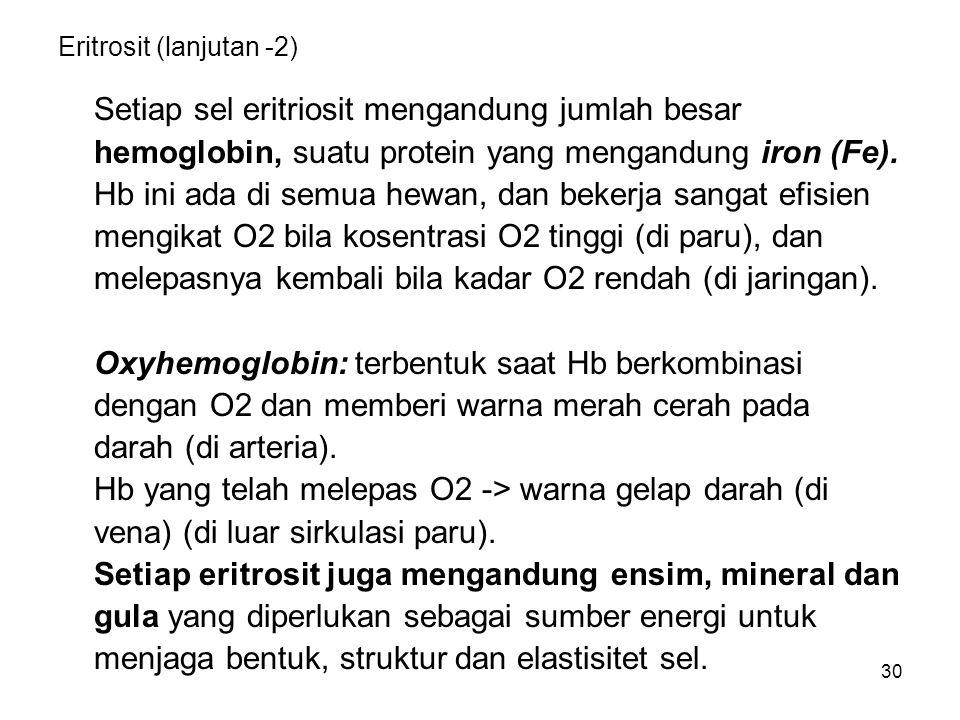 30 Eritrosit (lanjutan -2) Setiap sel eritriosit mengandung jumlah besar hemoglobin, suatu protein yang mengandung iron (Fe). Hb ini ada di semua hewa