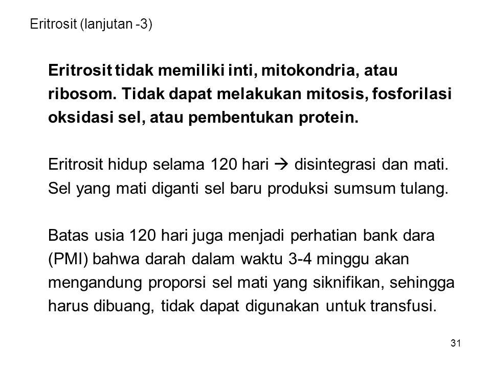 31 Eritrosit (lanjutan -3) Eritrosit tidak memiliki inti, mitokondria, atau ribosom. Tidak dapat melakukan mitosis, fosforilasi oksidasi sel, atau pem
