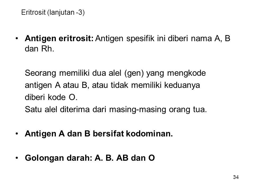 34 Eritrosit (lanjutan -3) Antigen eritrosit: Antigen spesifik ini diberi nama A, B dan Rh. Seorang memiliki dua alel (gen) yang mengkode antigen A at