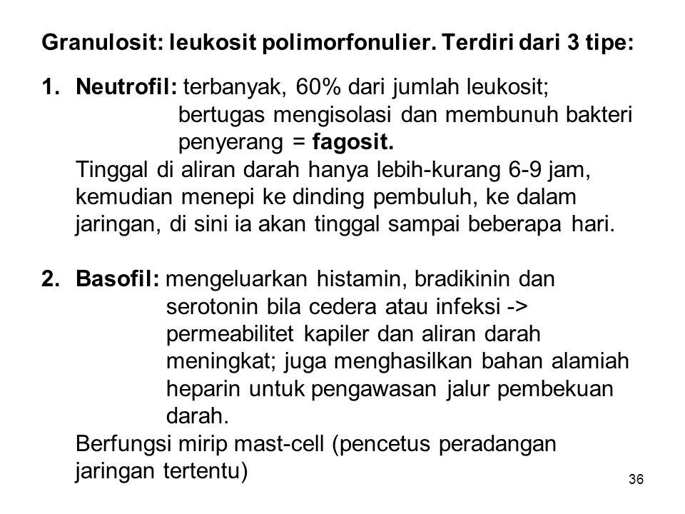 36 Granulosit: leukosit polimorfonulier. Terdiri dari 3 tipe: 1.Neutrofil: terbanyak, 60% dari jumlah leukosit; bertugas mengisolasi dan membunuh bakt