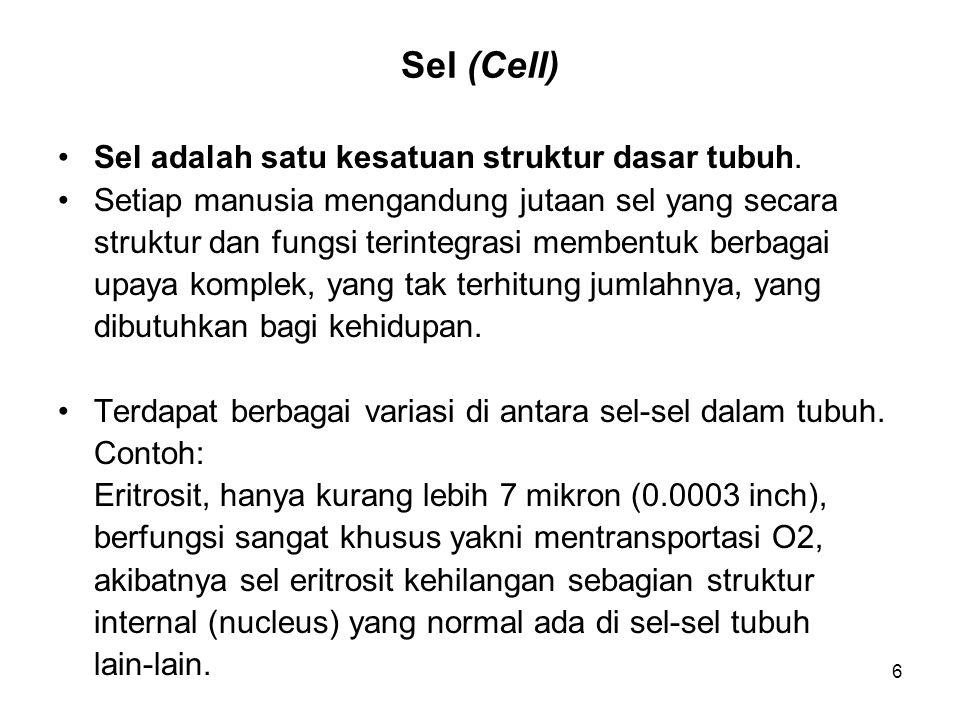 6 Sel (Cell) Sel adalah satu kesatuan struktur dasar tubuh. Setiap manusia mengandung jutaan sel yang secara struktur dan fungsi terintegrasi membentu