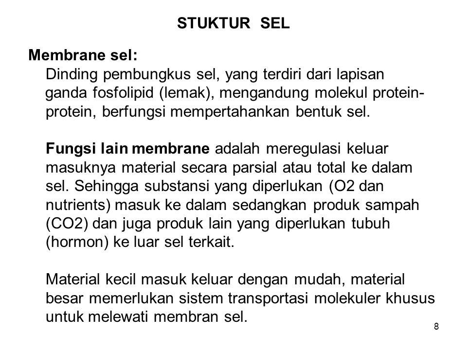 9 STUKTUR SEL (Lanjutan-1) Inti (nucleus) sel: Adalah pusat kontrol sel yang mengatur semua aktivitas mayor dan fungsi sel.