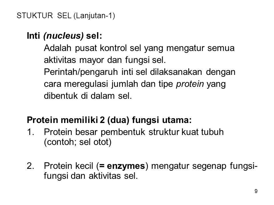 9 STUKTUR SEL (Lanjutan-1) Inti (nucleus) sel: Adalah pusat kontrol sel yang mengatur semua aktivitas mayor dan fungsi sel. Perintah/pengaruh inti sel