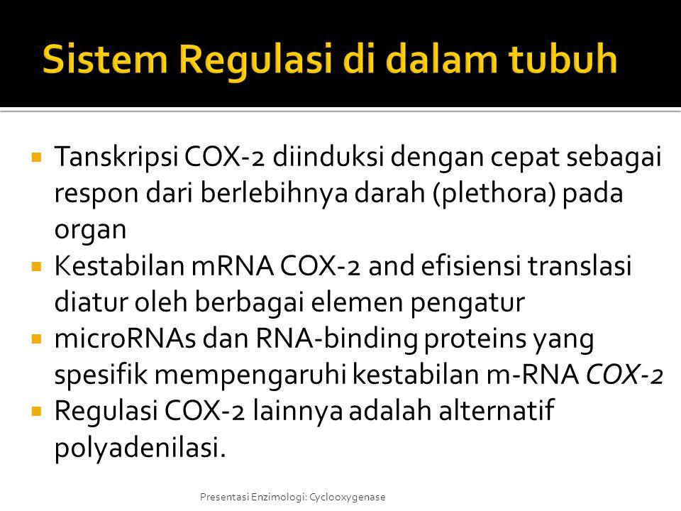  Tanskripsi COX-2 diinduksi dengan cepat sebagai respon dari berlebihnya darah (plethora) pada organ  Kestabilan mRNA COX-2 and efisiensi translasi