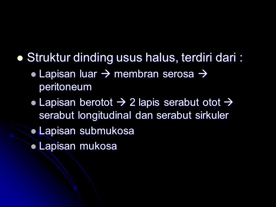 Struktur dinding usus halus, terdiri dari : Struktur dinding usus halus, terdiri dari : Lapisan luar  membran serosa  peritoneum Lapisan luar  membran serosa  peritoneum Lapisan berotot  2 lapis serabut otot  serabut longitudinal dan serabut sirkuler Lapisan berotot  2 lapis serabut otot  serabut longitudinal dan serabut sirkuler Lapisan submukosa Lapisan submukosa Lapisan mukosa Lapisan mukosa