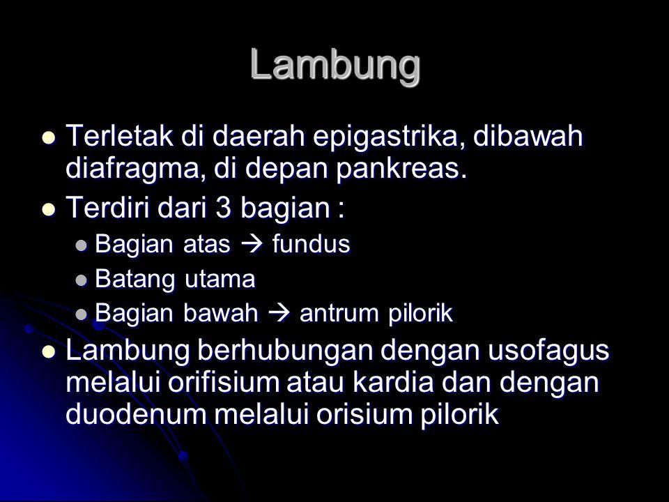 Struktur lambung, terdiri dari 4 lapis : Struktur lambung, terdiri dari 4 lapis : Lapisan peritoneal  lapisan serosa Lapisan peritoneal  lapisan serosa Lapisan berotot  serabut longitudinal, serabut sirkuler, serabut oblik Lapisan berotot  serabut longitudinal, serabut sirkuler, serabut oblik Lapisan submukosa  terdiri dari jaringan areolar  pembuluh darah dan saluran limfe Lapisan submukosa  terdiri dari jaringan areolar  pembuluh darah dan saluran limfe Lapisan mukosa  tebal dan terdapat banyak rugae (kerutan) Lapisan mukosa  tebal dan terdapat banyak rugae (kerutan) Peredaran darah lambung  arteri gastrika dan arteri lienalis Peredaran darah lambung  arteri gastrika dan arteri lienalis Persarafan lambung  N.Vagus dan saraf simpatis Persarafan lambung  N.Vagus dan saraf simpatis