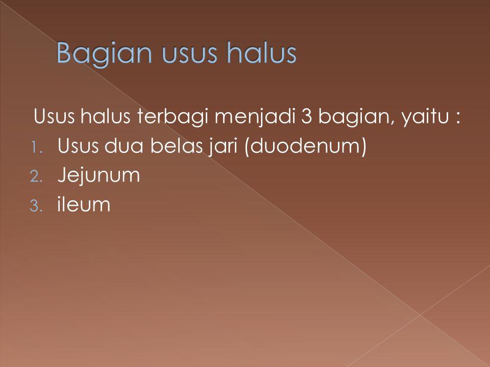 Usus halus terbagi menjadi 3 bagian, yaitu : 1. Usus dua belas jari (duodenum) 2. Jejunum 3. ileum