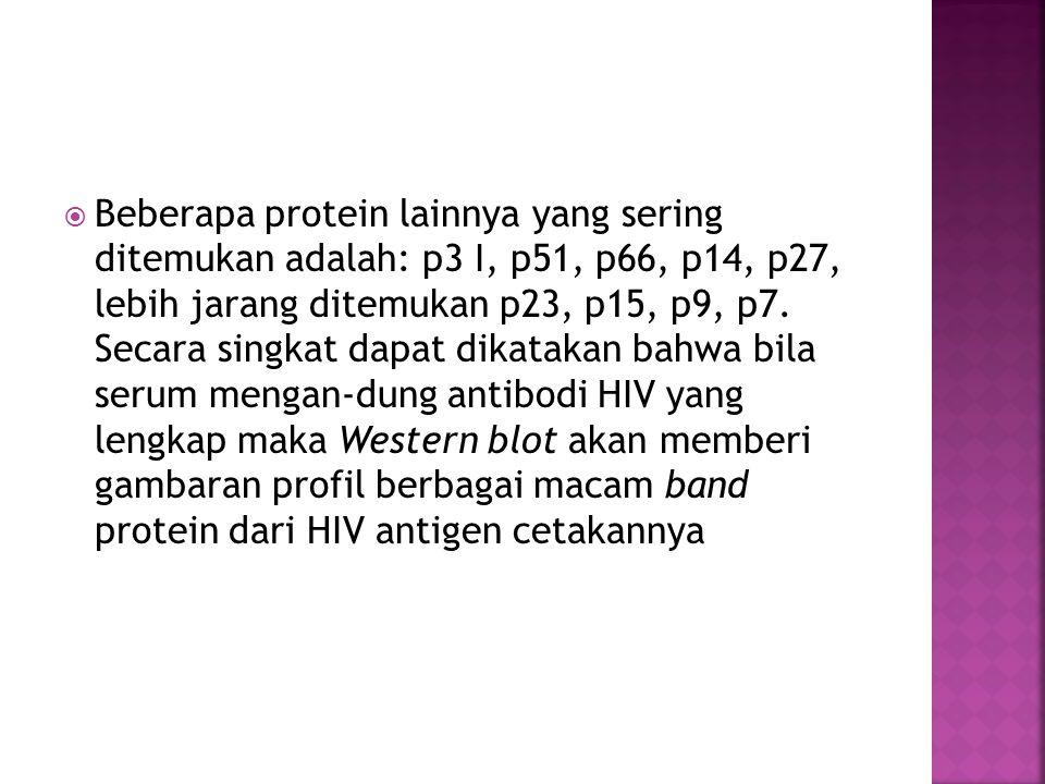  Beberapa protein lainnya yang sering ditemukan adalah: p3 I, p51, p66, p14, p27, lebih jarang ditemukan p23, p15, p9, p7. Secara singkat dapat dikat