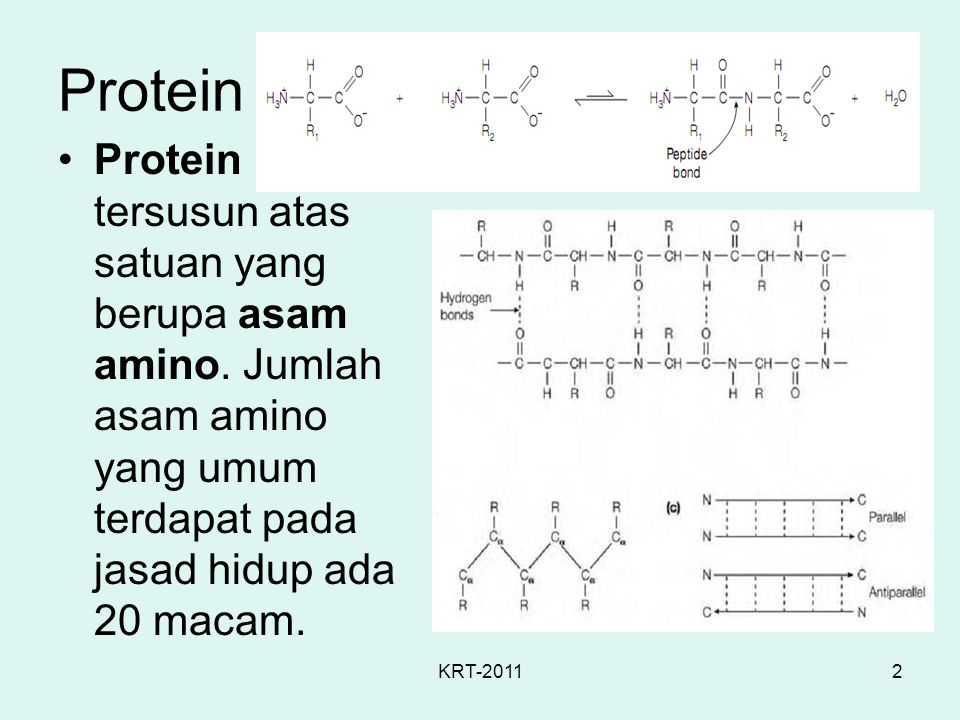 KRT-20112 Protein Protein tersusun atas satuan yang berupa asam amino. Jumlah asam amino yang umum terdapat pada jasad hidup ada 20 macam.