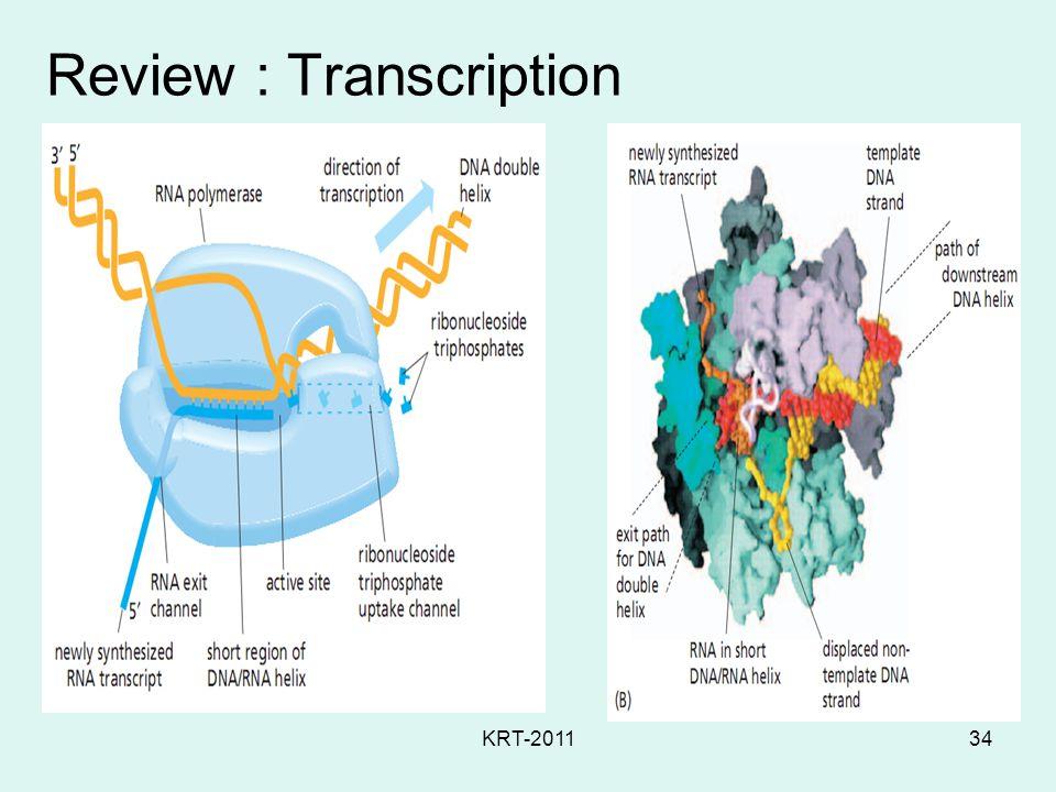 KRT-201134 Review : Transcription