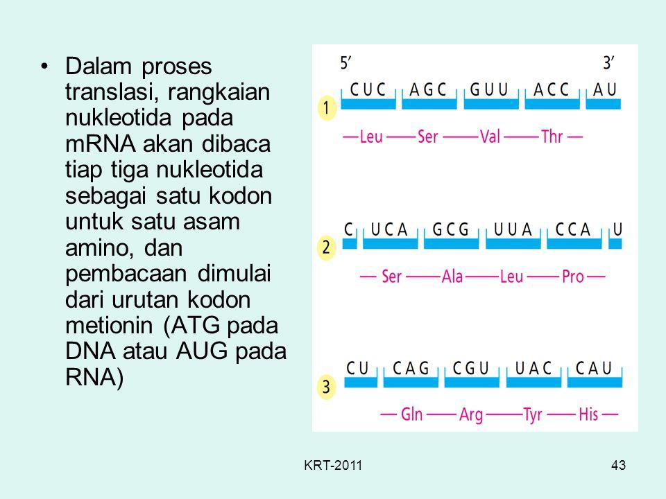 KRT-201143 Dalam proses translasi, rangkaian nukleotida pada mRNA akan dibaca tiap tiga nukleotida sebagai satu kodon untuk satu asam amino, dan pemba