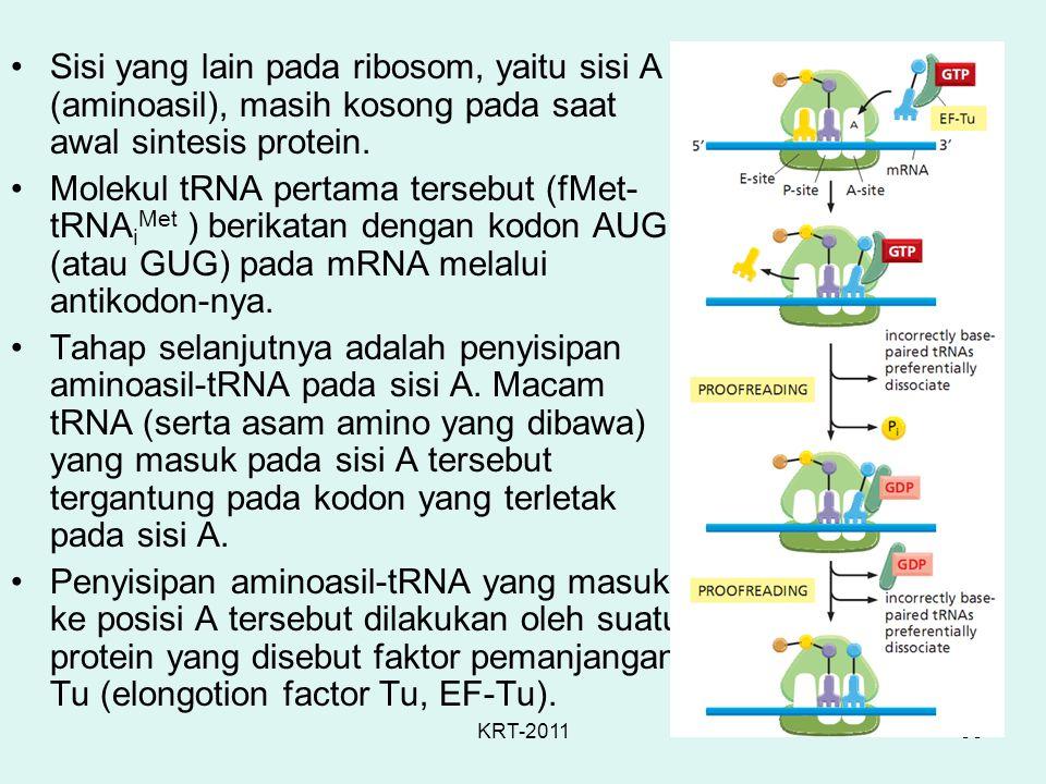 KRT-201153 Sisi yang lain pada ribosom, yaitu sisi A (aminoasil), masih kosong pada saat awal sintesis protein. Molekul tRNA pertama tersebut (fMet- t