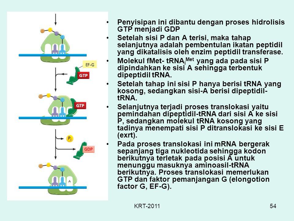 KRT-201154 Penyisipan ini dibantu dengan proses hidrolisis GTP menjadi GDP Setelah sisi P dan A terisi, maka tahap selanjutnya adalah pembentulan ikat