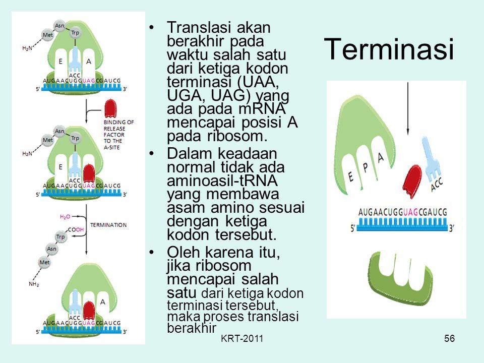 KRT-201156 Terminasi Translasi akan berakhir pada waktu salah satu dari ketiga kodon terminasi (UAA, UGA, UAG) yang ada pada mRNA mencapai posisi A pa