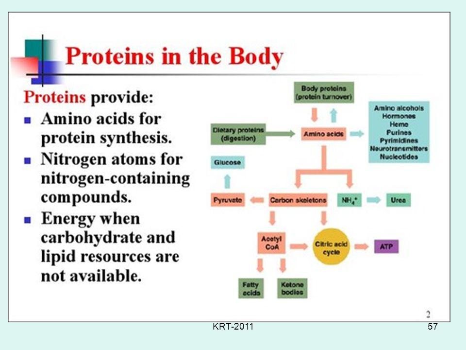 KRT-201157 Protein Metabolism