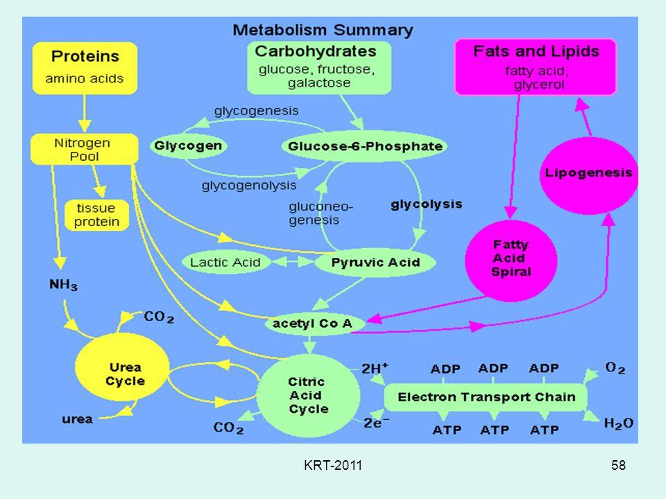 KRT-201158 Protein Metabolism