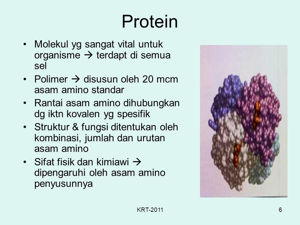6 Protein Molekul yg sangat vital untuk organisme  terdapt di semua sel Polimer  disusun oleh 20 mcm asam amino standar Rantai asam amino dihubungka