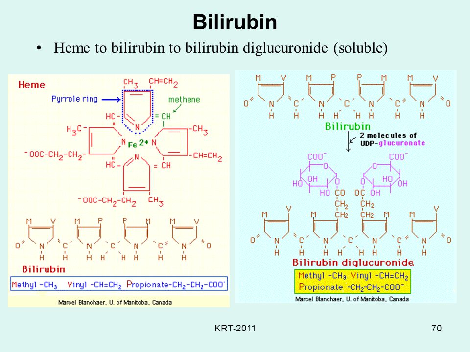 KRT-201170 Bilirubin Heme to bilirubin to bilirubin diglucuronide (soluble)
