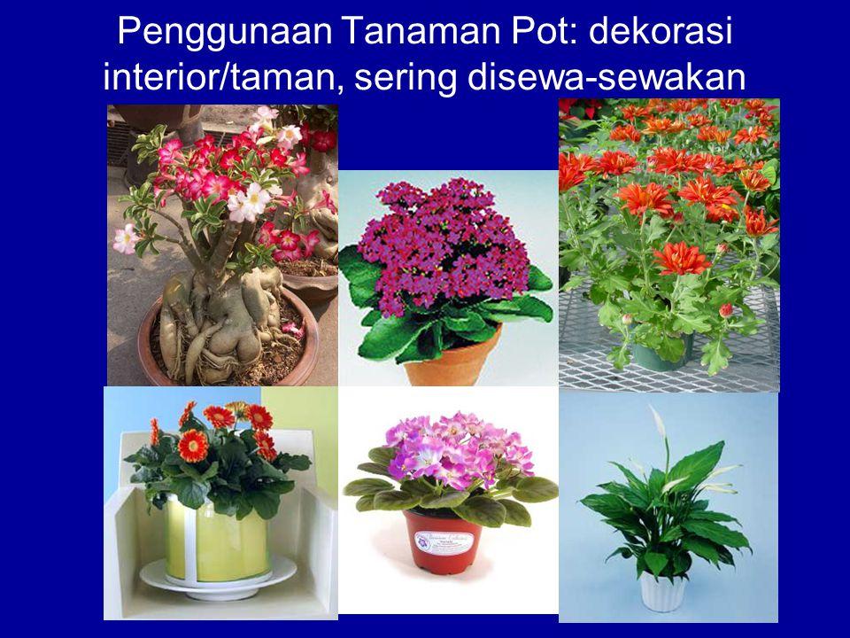 Penggunaan Tanaman Pot: dekorasi interior/taman, sering disewa-sewakan