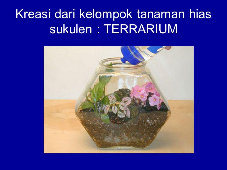 Kreasi dari kelompok tanaman hias sukulen : TERRARIUM