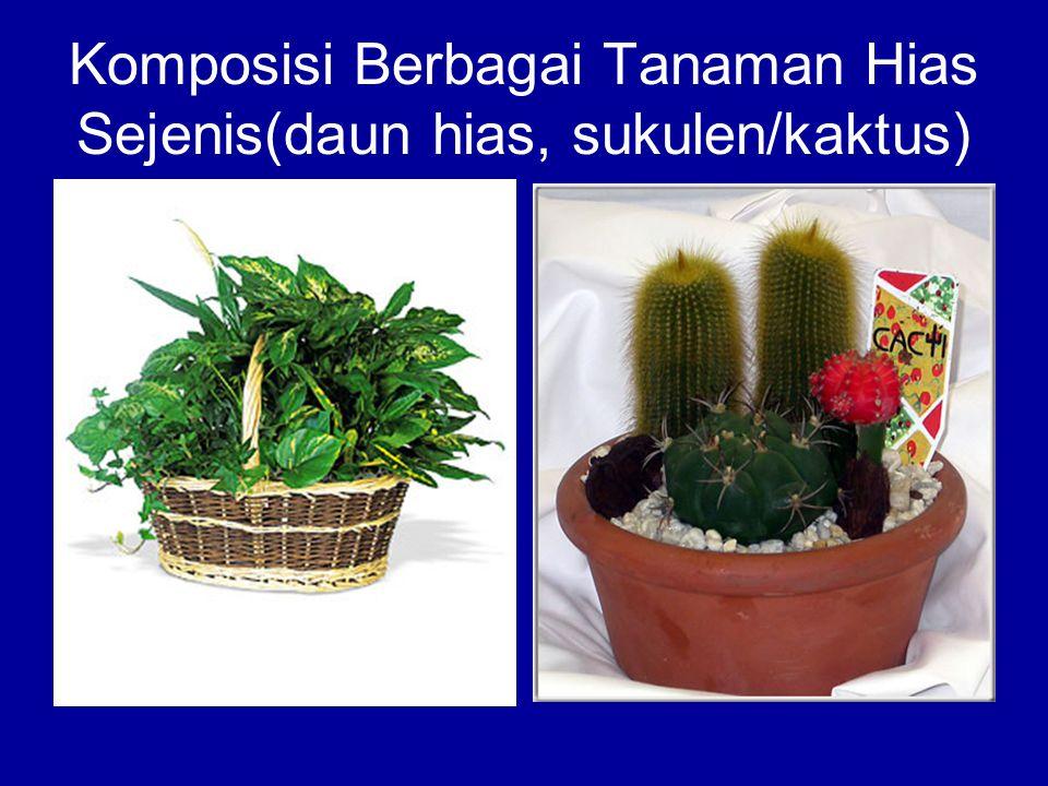 Komposisi Berbagai Tanaman Hias Sejenis(daun hias, sukulen/kaktus)