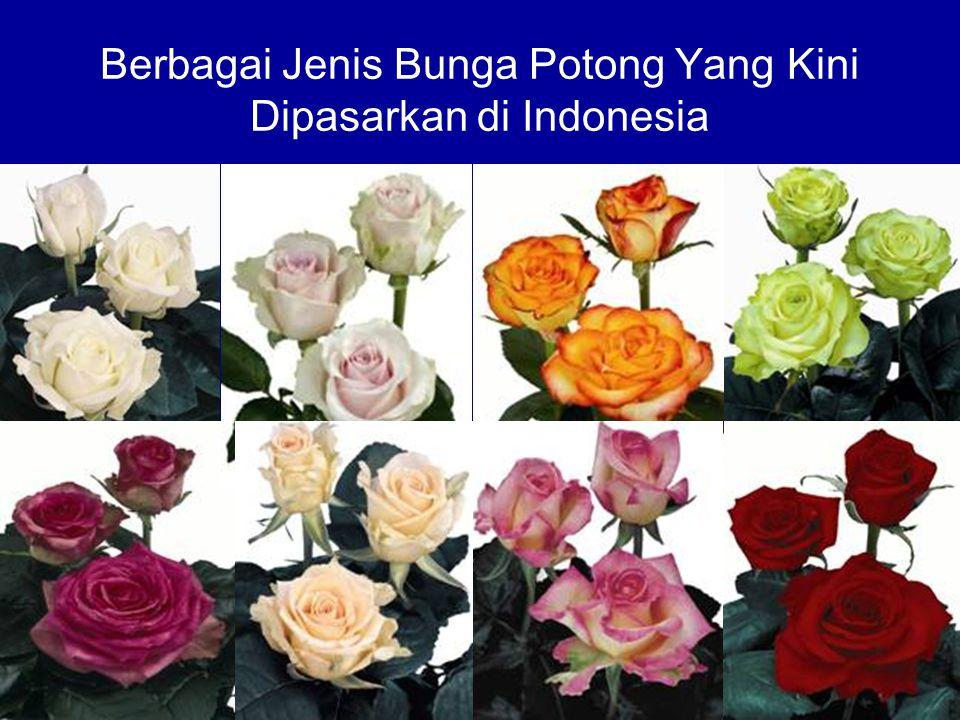 Berbagai Jenis Bunga Potong Yang Kini Dipasarkan di Indonesia