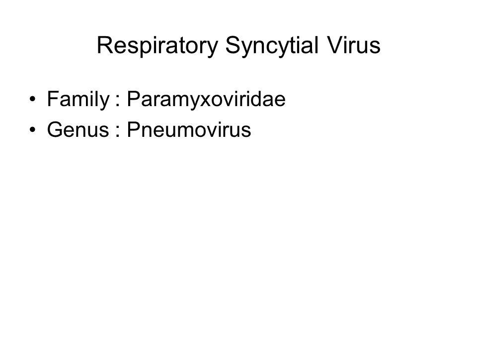 Respiratory Syncytial Virus Family : Paramyxoviridae Genus : Pneumovirus