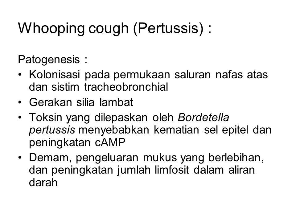 Whooping cough (Pertussis) : Patogenesis : Kolonisasi pada permukaan saluran nafas atas dan sistim tracheobronchial Gerakan silia lambat Toksin yang d