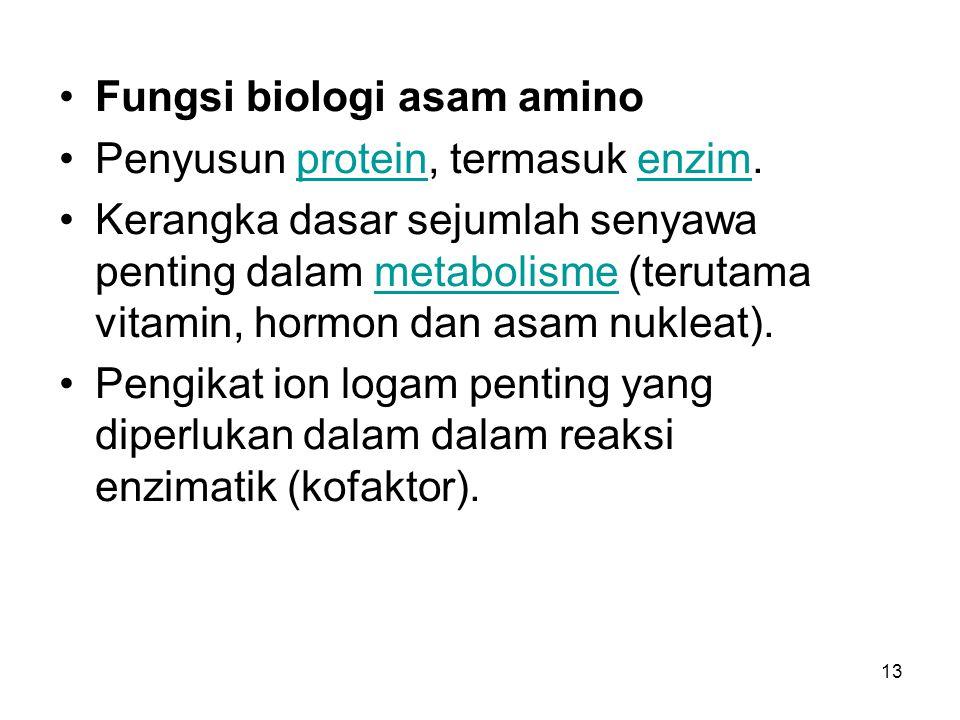 13 Fungsi biologi asam amino Penyusun protein, termasuk enzim.proteinenzim Kerangka dasar sejumlah senyawa penting dalam metabolisme (terutama vitamin
