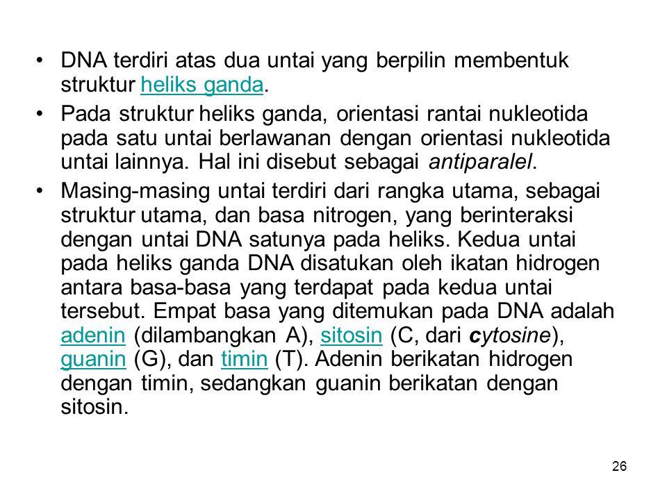 26 DNA terdiri atas dua untai yang berpilin membentuk struktur heliks ganda.heliks ganda Pada struktur heliks ganda, orientasi rantai nukleotida pada