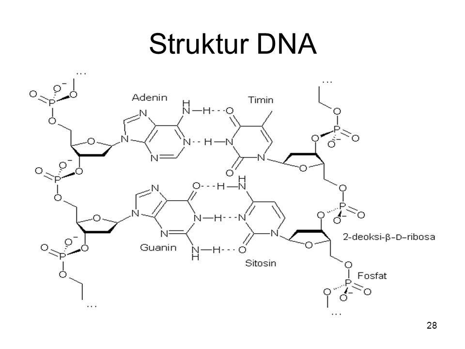 28 Struktur DNA