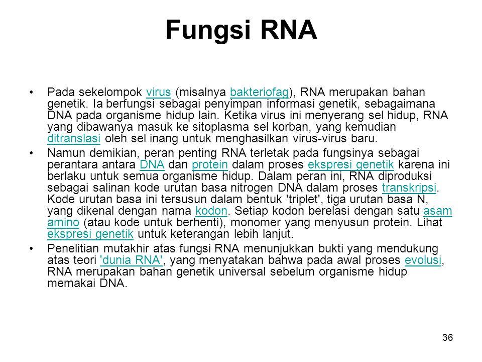 36 Fungsi RNA Pada sekelompok virus (misalnya bakteriofag), RNA merupakan bahan genetik. Ia berfungsi sebagai penyimpan informasi genetik, sebagaimana