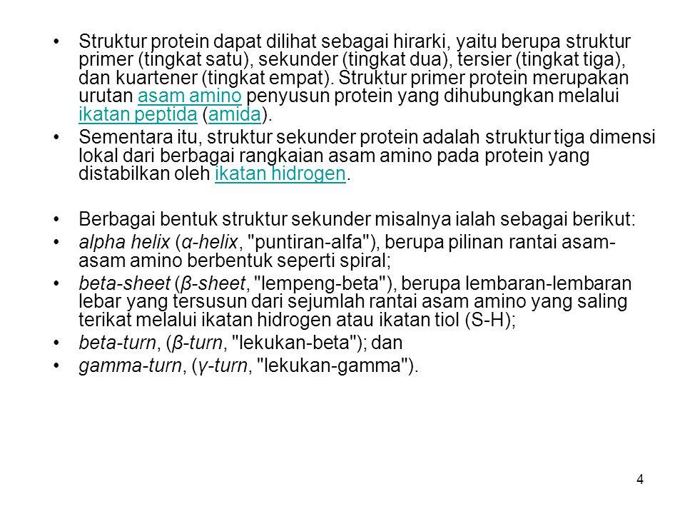 4 Struktur protein dapat dilihat sebagai hirarki, yaitu berupa struktur primer (tingkat satu), sekunder (tingkat dua), tersier (tingkat tiga), dan kua