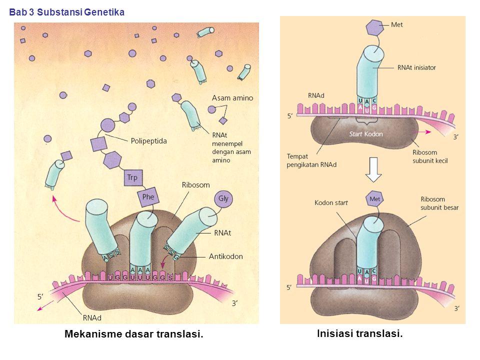 Mekanisme dasar translasi. Inisiasi translasi. Bab 3 Substansi Genetika