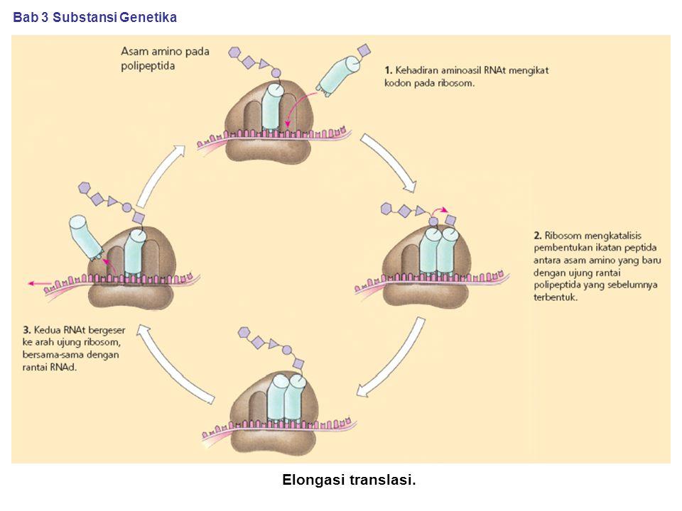 Elongasi translasi. Bab 3 Substansi Genetika