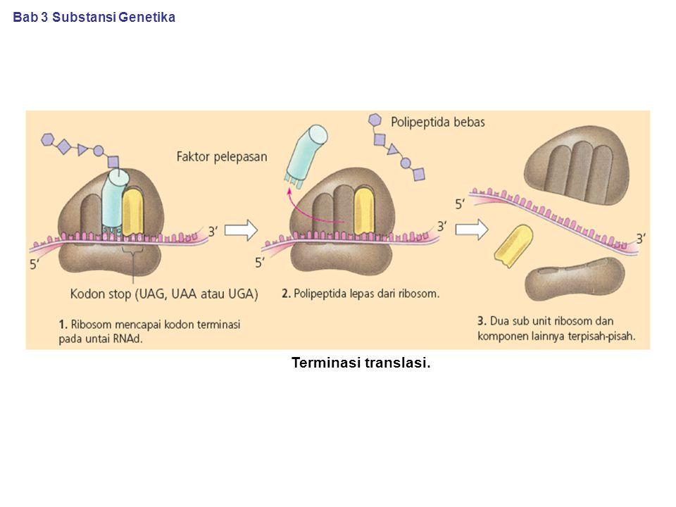 Terminasi translasi. Bab 3 Substansi Genetika