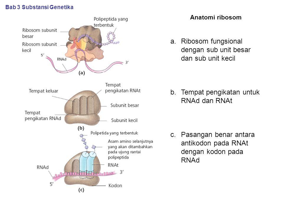 Anatomi ribosom Bab 3 Substansi Genetika a.Ribosom fungsional dengan sub unit besar dan sub unit kecil b.Tempat pengikatan untuk RNAd dan RNAt c.Pasangan benar antara antikodon pada RNAt dengan kodon pada RNAd