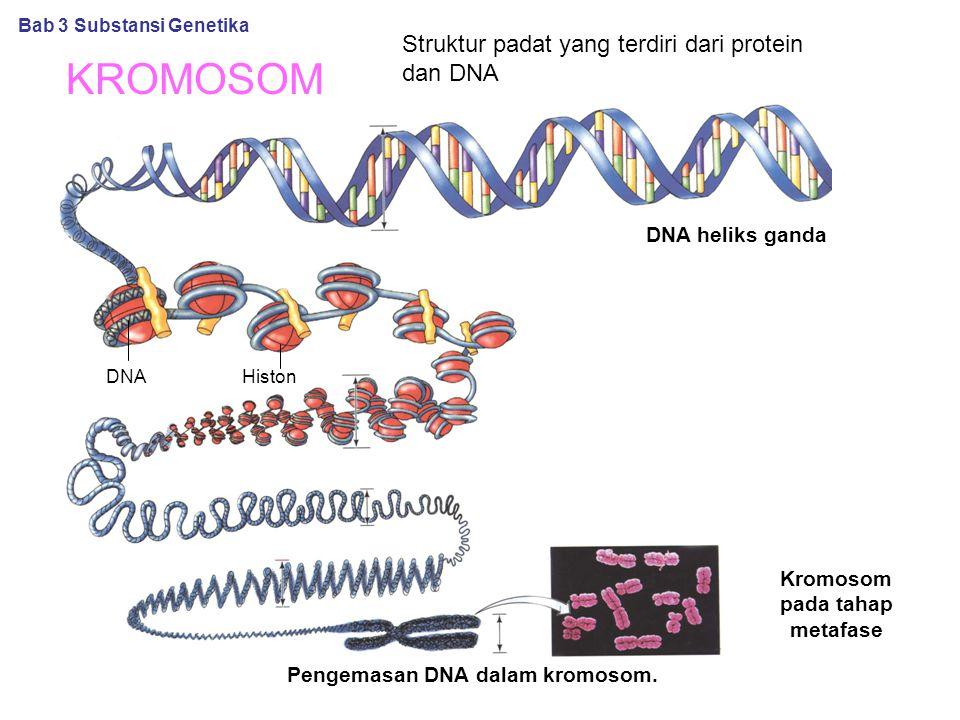 KROMOSOM Pengemasan DNA dalam kromosom. Bab 3 Substansi Genetika DNA heliks ganda Kromosom pada tahap metafase Struktur padat yang terdiri dari protei