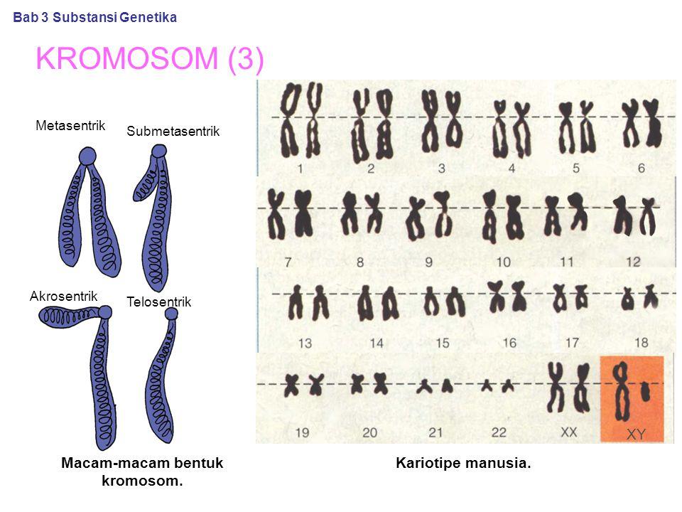KROMOSOM (3) Macam-macam bentuk kromosom.Kariotipe manusia.