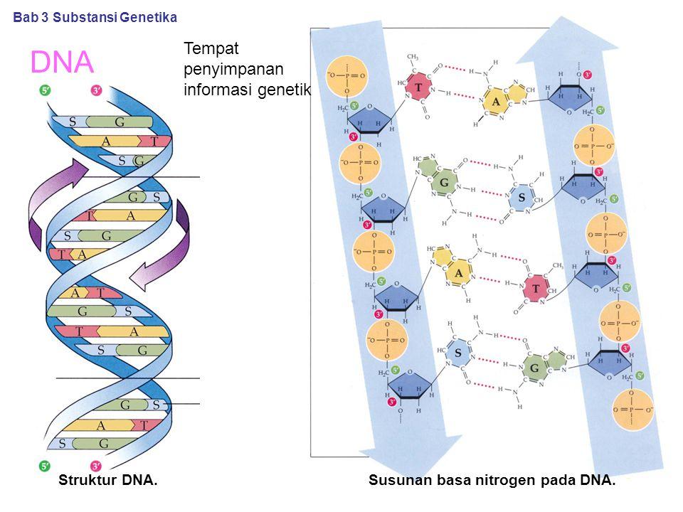 DNA Susunan basa nitrogen pada DNA. Bab 3 Substansi Genetika Struktur DNA. Tempat penyimpanan informasi genetik