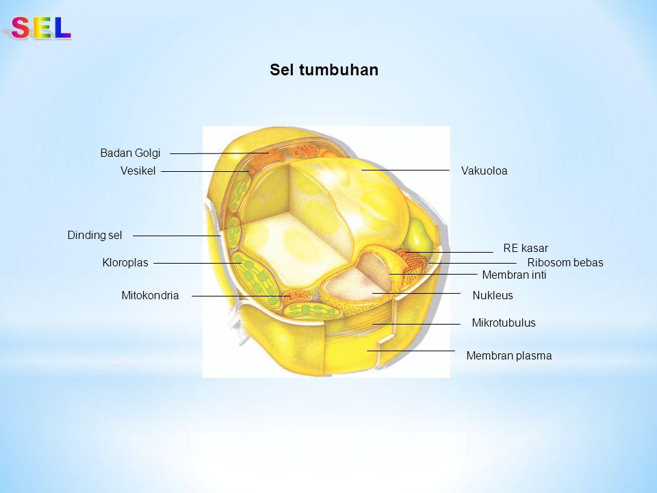 Vakuoloa Ribosom bebas RE kasar Nukleus Membran inti Membran plasma Dinding sel Mikrotubulus Mitokondria Badan Golgi Vesikel Kloroplas Sel tumbuhan