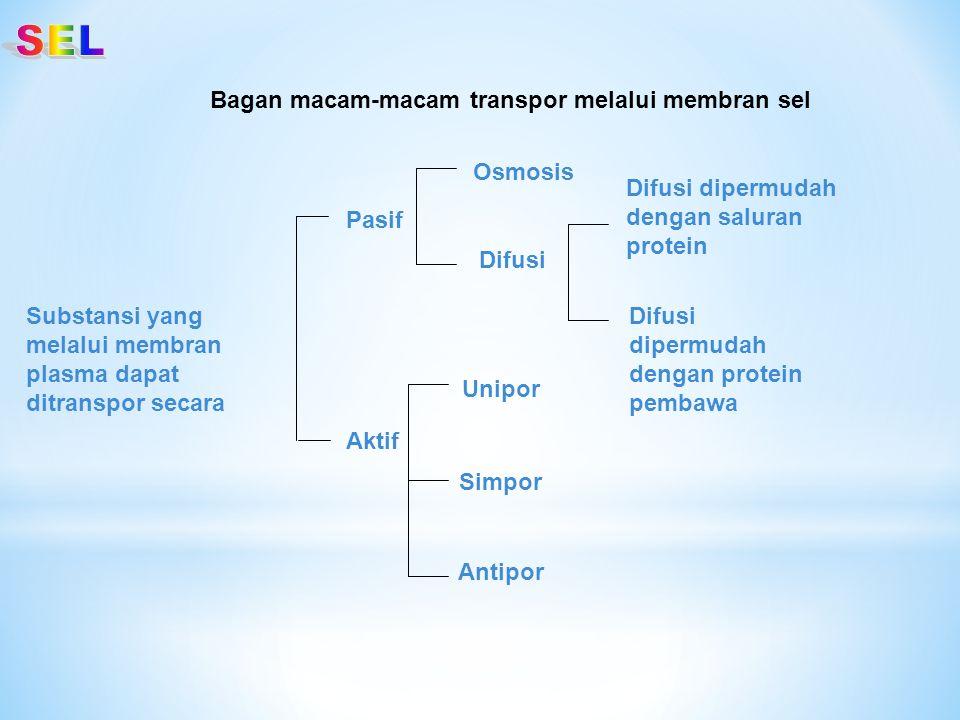 Substansi yang melalui membran plasma dapat ditranspor secara Pasif Aktif Osmosis Unipor Difusi Simpor Antipor Difusi dipermudah dengan saluran protei