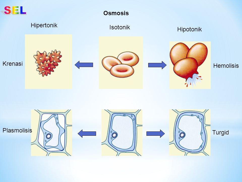 Hipertonik Hipotonik Isotonik Krenasi Hemolisis Plasmolisis Turgid Osmosis