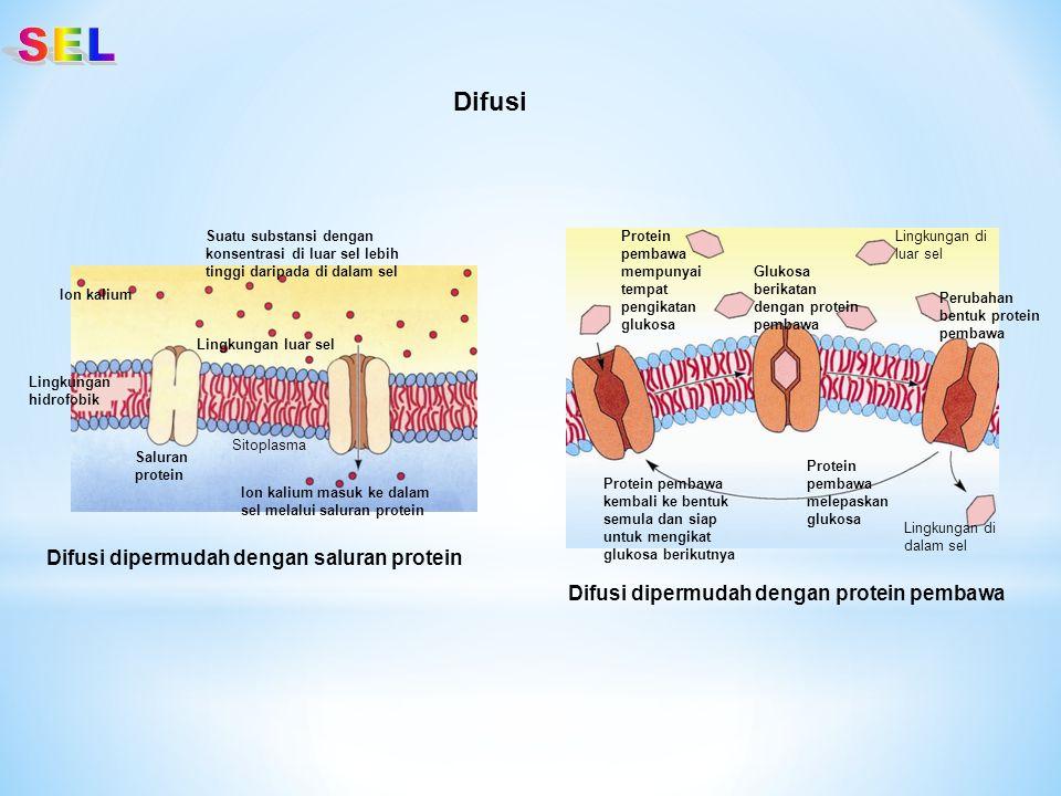 Difusi Suatu substansi dengan konsentrasi di luar sel lebih tinggi daripada di dalam sel Saluran protein Ion kalium masuk ke dalam sel melalui saluran