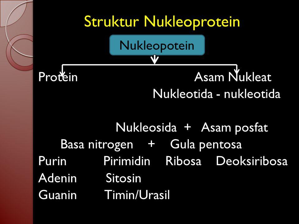3. Asam nukleat Kromosom tersusun atas nukleoprotein = asam nukleat + protein ( histon/protamin ) Asam nukleat ada 2 jenis : 1. DNA ( Deoksiribosa Nuk