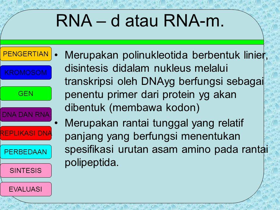 PENGERTIAN KROMOSOM GEN DNA DAN RNA REPLIKASI DNA PERBEDAAN SINTESIS EVALUASI RNA ( Ribonukleic Acid) Merupakan benang tunggal, tersusun dari gula rib
